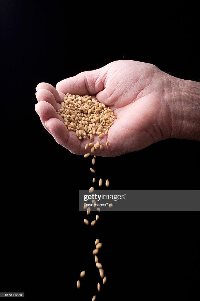 Grain and Hand