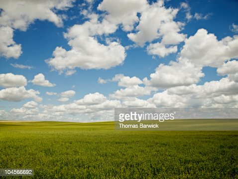 Grain field sky and clouds : Stock Photo