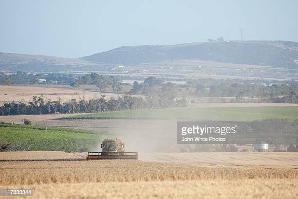 Grain harvester in wheat field