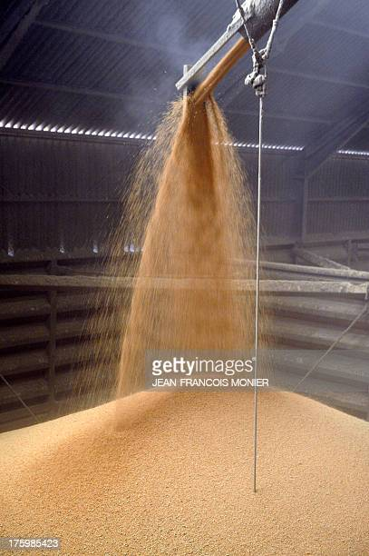 A grain silo is filled with freshly harvested wheat on August 10 in SaintGermaind'Arce western France on August 10 2013 AFP PHOTO / JEANFRANCOIS...
