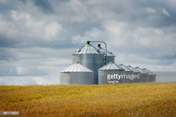 Grain Silos by Wheat Field in Agricultural Crop Harvest Landscape