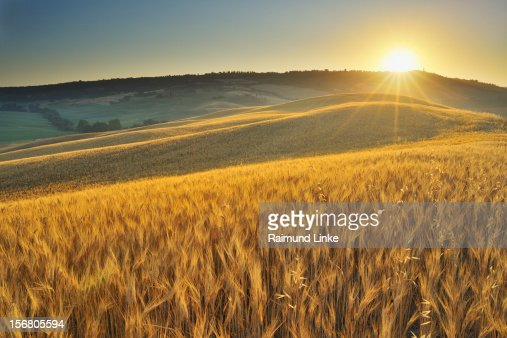 Grainfield with Sunrise