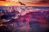 Grand Canyon National Park seen from Desert View. eagle flies in the sky.