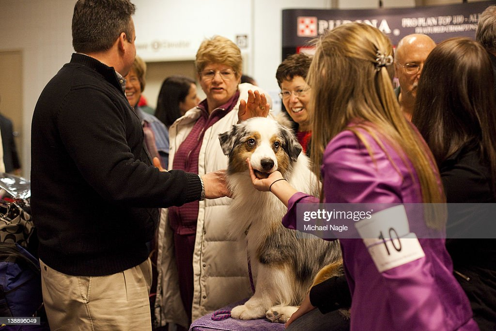 Grand Champion Oakhurst Crusin' in Chrome, an Australian Shepard, is greeted backstage at the Westminster Kennel Club Dog Show after winning best of opposite sex on February 13, 2012 in New York City. The Westminster Kennel Club Dog Show first held in 1877, is the second-longest continuously held sporting event in the U.S., second only to the Kentucky Derby.
