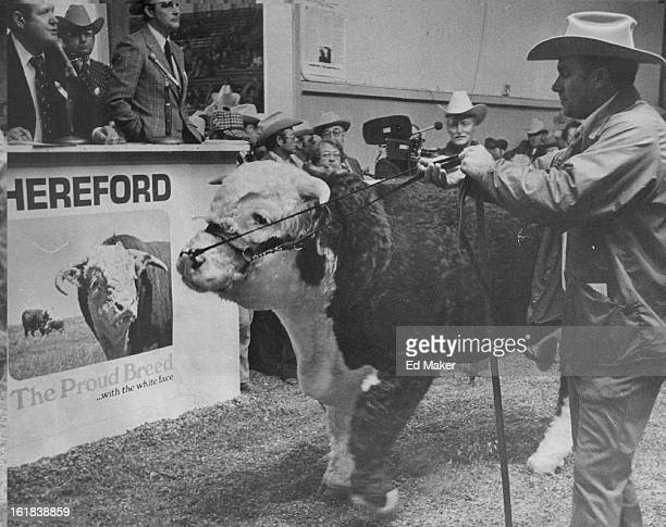JAN 20 1976 JAN 21 1976 Grand Championship For Grand Slam750oPound Hereford Bull The big bull was purchased by the Granite Hills Hereford Ranch Llano...