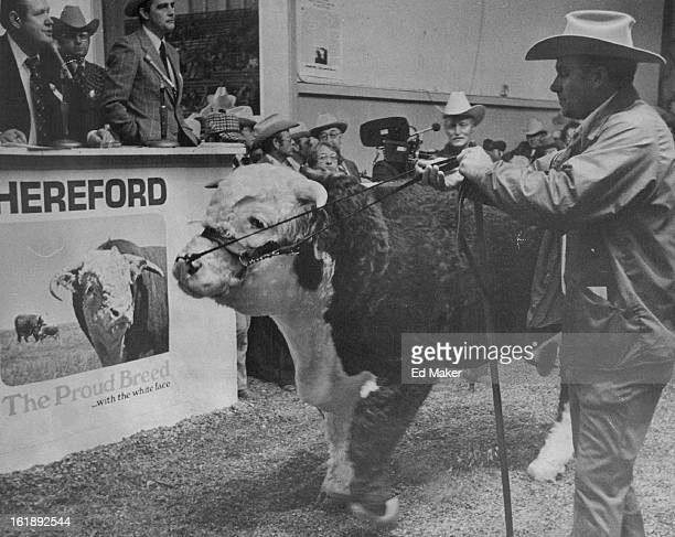 JAN 20 1976 JAN 21 1976 Grand Championship For Grand Slam750Pound Hereford Bull The big bull was purchased by the Granite Hills Hereford Ranch Llano...