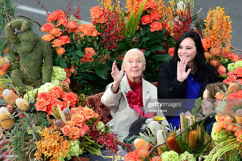 Grand Marshal Jane Goodall participates in the 124th annual Rose Parade themed 'Oh, the Places You'll Go!' on January 1, 2013 in Pasadena, California.