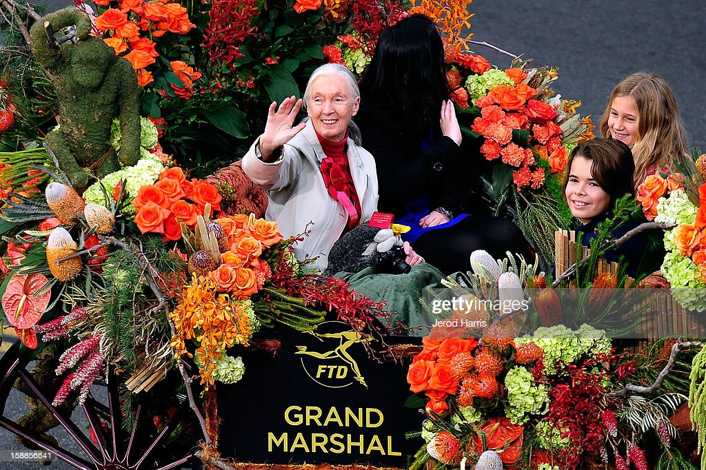 Grand Marshall <a gi-track='captionPersonalityLinkClicked' href=/galleries/search?phrase=Jane+Goodall&family=editorial&specificpeople=224034 ng-click='$event.stopPropagation()'>Jane Goodall</a> participates in the 124th annual Rose Parade themed 'Oh, the Places You'll Go!' on January 1, 2013 in Pasadena, California.