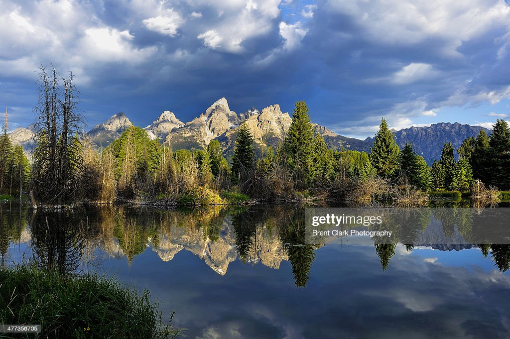 Grand Teton Marsh Reflection