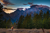 Grand Teton Elks near the road at Sunset