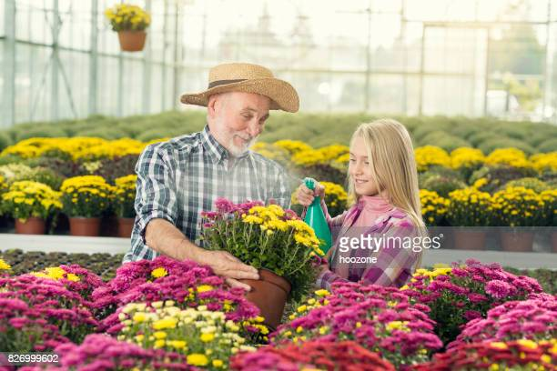 Granddaughter and grandfather working in greenhouse together