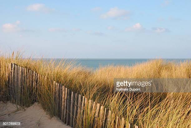 Grandes herbes dans les dunes de sable en Bretagne