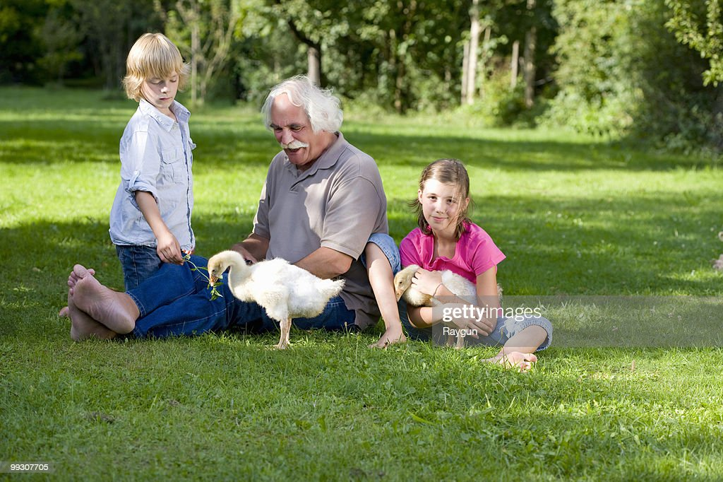 Grandfather and grandchildren with geese : Stock Photo