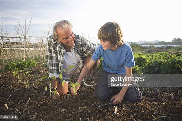 Grandfather and grandson planting
