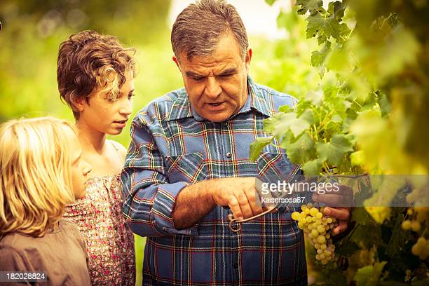 Grandfather and his grandchildren in vineyard
