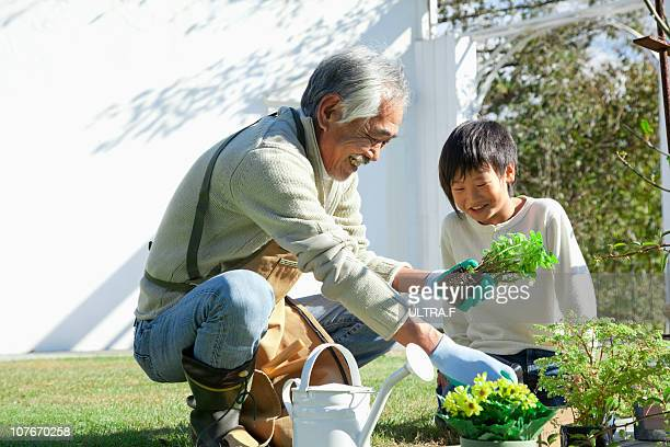 Grandfather and the boy are doing gardening.