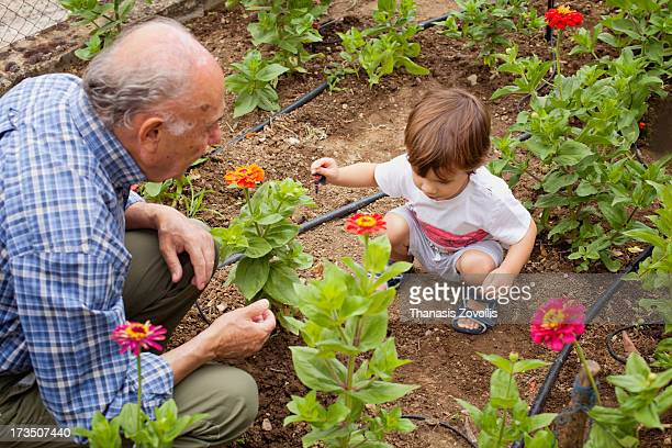 Grandfather doing garden works with his grandson