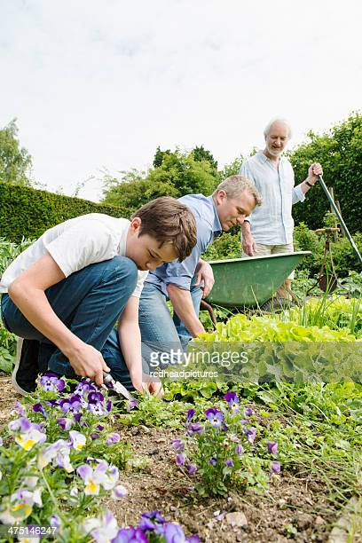 Grandfather, father and son gardening