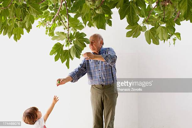 Grandfather gives figs to his grandson