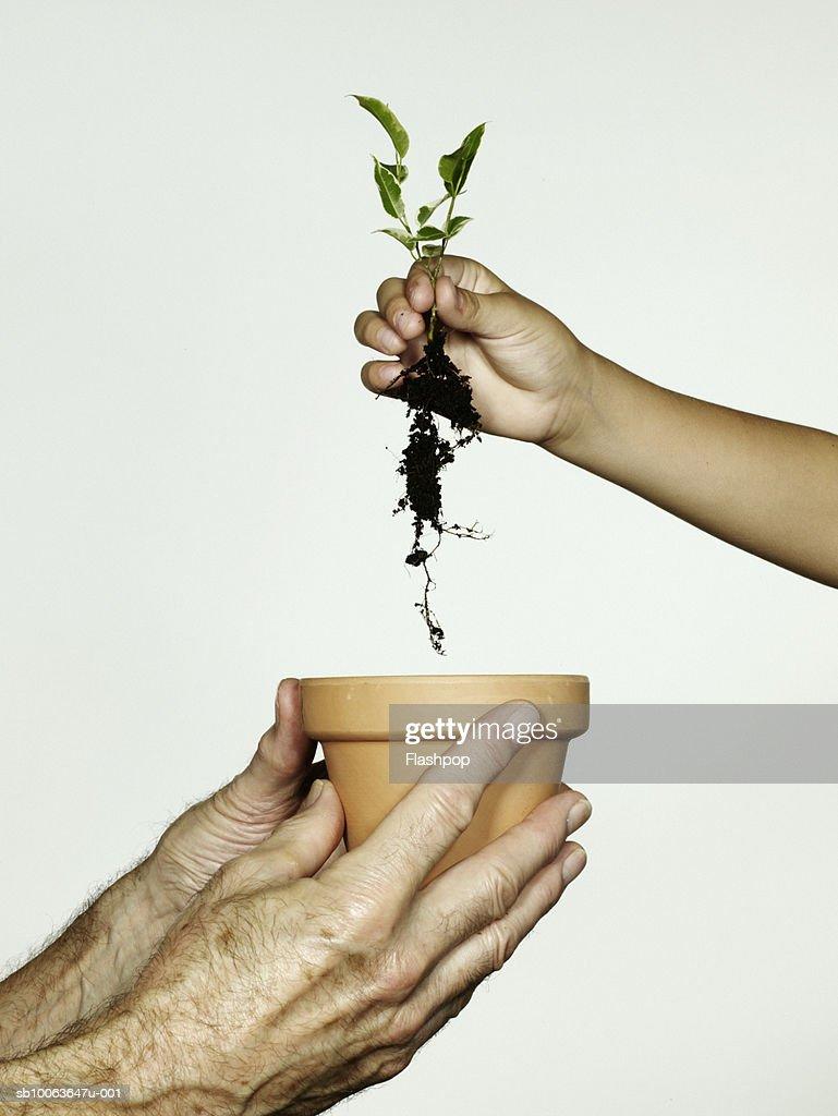 Grandfather holding pot, grandson (6-7) holding sapling, close-up : Stock Photo