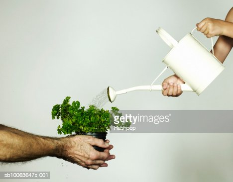 Grandfather holding pot plant, grandson (4-5) pouring water from water can, close-up : Stock Photo