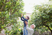 Grandfather lifting grandson up to apple tree
