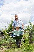 Grandfather pushing boy in wheel barrow in garden