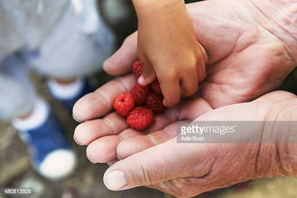 Grandfather sharing raspberries with grandson