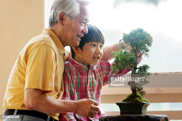 Grandfather showing grandson how to take care of Tree Penjing