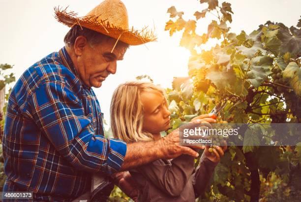 Nonno e nipote di insegnamento Fare la raccolta