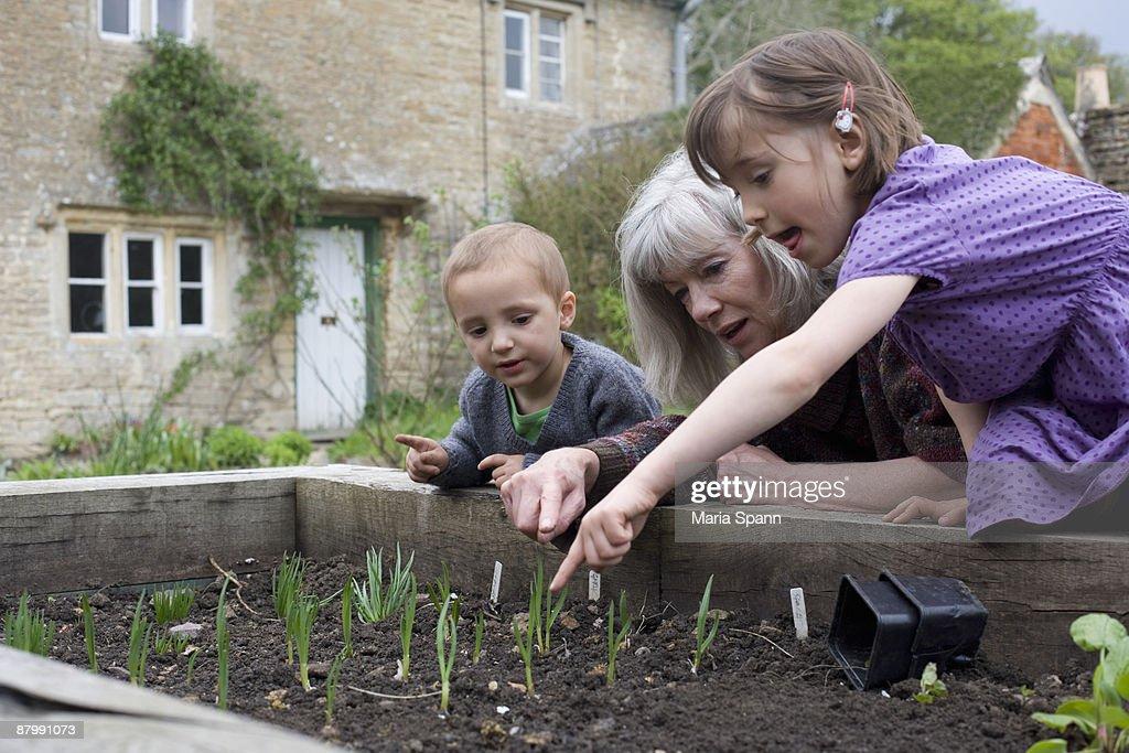 Grandma planting herbs with grandchildren : Stock Photo