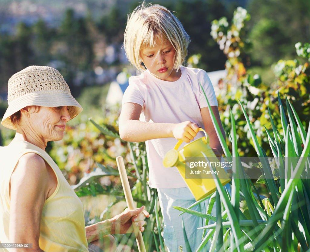 Grandmother and granddaughter (6-8) gardening : Stock Photo