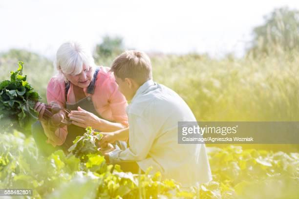 Grandmother and grandson harvesting vegetables in sunny garden