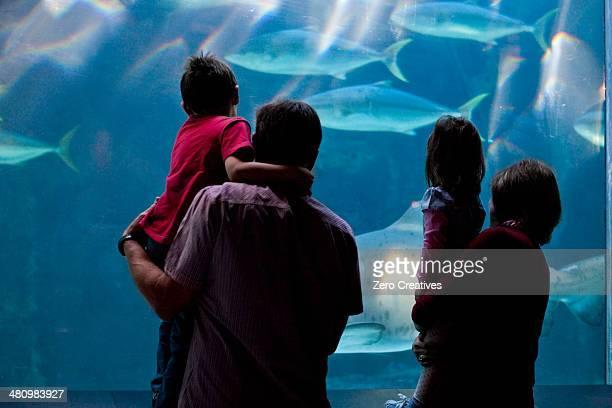Grandparents and grandchildren looking at fish in aquarium