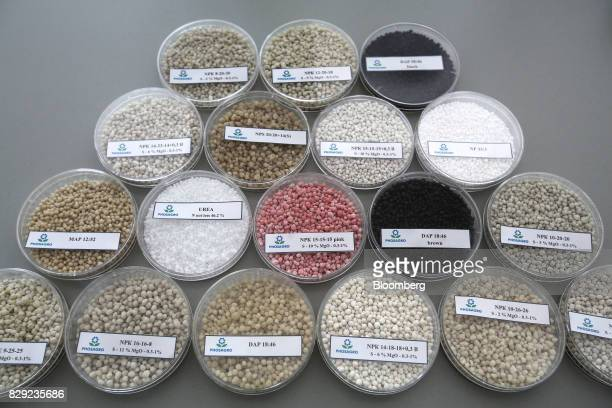 Granules of fertilizer samples sit on display at the PhosAgroCherepovets fertilizer plant operated by PhosAgro PJSC in Cherepovets Russia on...