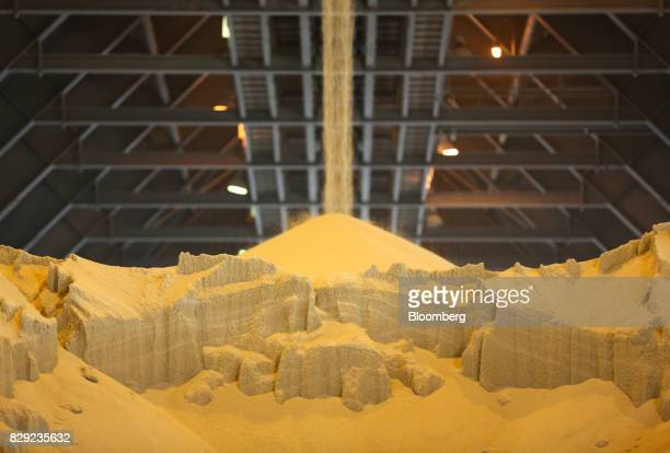 Granules of monoammonium phosphate sit inside a storage warehouse at the PhosAgroCherepovets fertilizer plant operated by PhosAgro PJSC in...