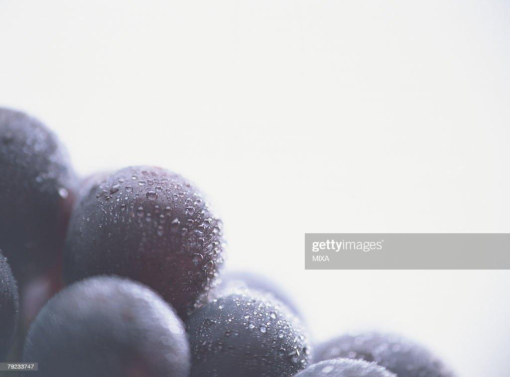 Grape, close-up : Stock Photo