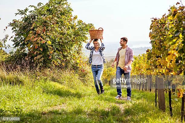 Grape harvest, Young couple having fun, Slavonia, Croatia