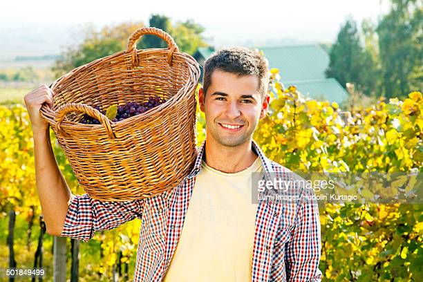 Grape harvest, Young man carrying basket with grapes, Slavonia, Croatia
