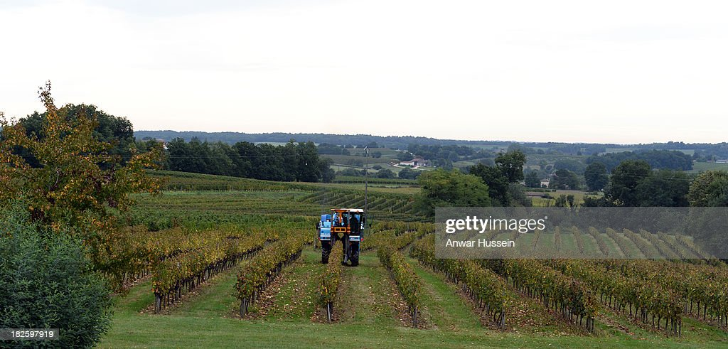 A grape harvester works at harvesting Merlot grape vines at Chateau Fontcaille Bellevue on October 1, 2013 in Bordeaux, France. The hot humid weather means that the Merlot wine harvest (vendange) has been brought forward in a race against rot.
