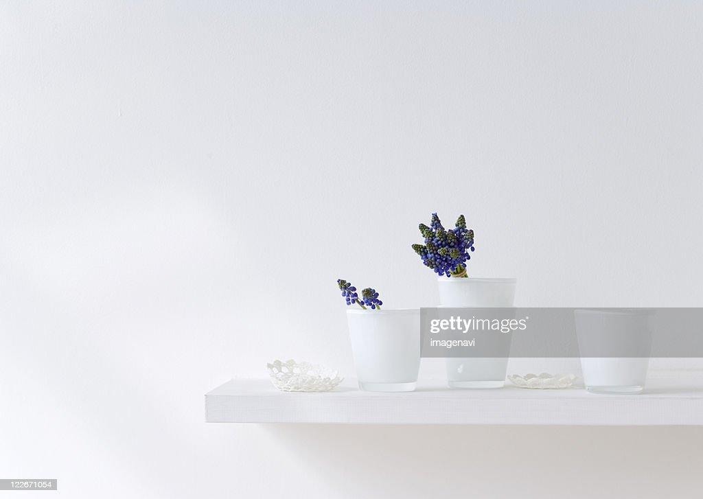 Grape hyacinths in glass