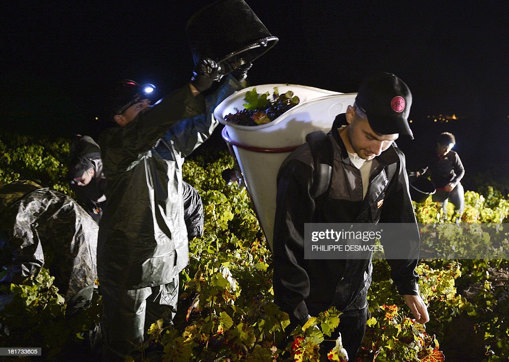 Grape pickers work at night on the first day of the Beaujolais' harvest on September 24, 2013 in the 'Moulin a Vent' vineyard, near Chenas, Beaujolais, eastern France. Harvest in Beaujolais region will run until October 20.