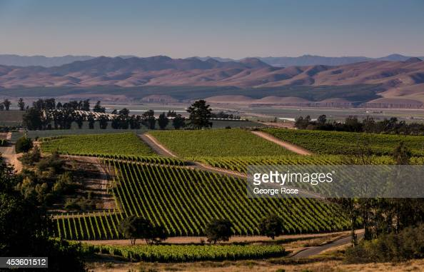 Grape vineyards have become a popular agricutural crop to grow on the nearby hillsides of Santa Maria on July 11 near Santa Maria California Because...