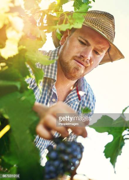 Grapes are a great addition to any farm