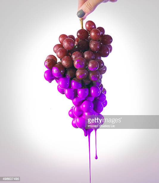 Grapes being Dipped in Paint