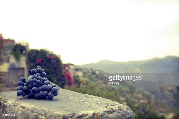 Grapes on an old wall in Sicily, Italy