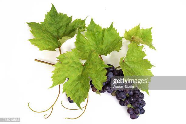 Grapes violet with Leafs