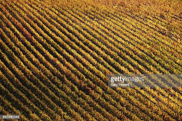 Graphic vineyards in Autumn colours