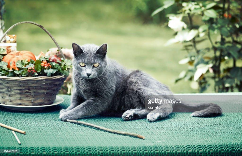 Graphite cat : Stock Photo
