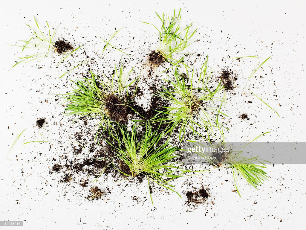 Grass and dirt on pure white ground